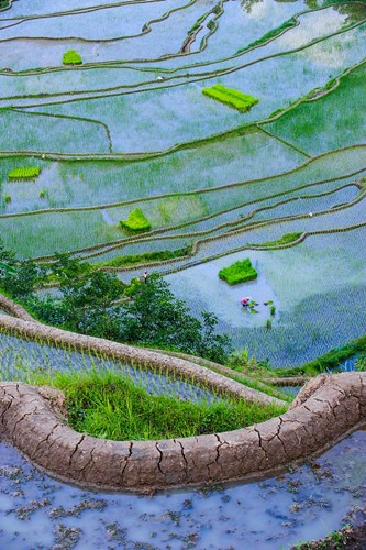 Rice Terraces Of Banaue, Philippines Poster by Michael Runkel / DanitaDelimont for $42.50 CAD