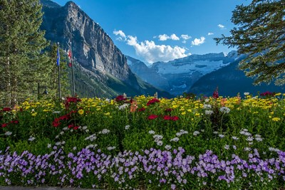 Wildflowers In Banff National Park Poster by Howie Garber / Danita Delimont for $47.50 CAD