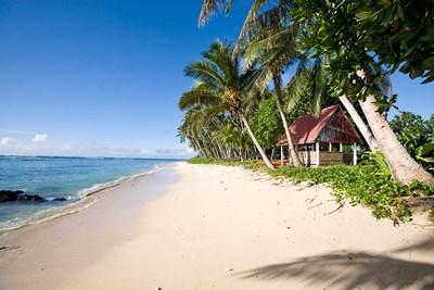 Palm Trees at Lavena Beach, Taveuni, Fiji Poster by Douglas Peebles / Danita Delimont for $38.75 CAD