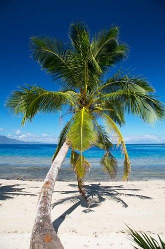 Beach, Waitatavi Bay, Vanua Levu, Fiji Poster by Douglas Peebles / Danita Delimont for $45.00 CAD