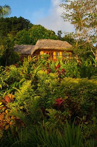 Lush Gardens, Matangi Private Island Resort, Fiji Poster by Douglas Peebles / Danita Delimont for $45.00 CAD