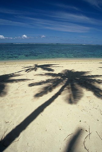Shadow of Palm Trees on Beach, Coral Coast, Fiji Poster by David Wall / Danita Delimont for $40.00 CAD