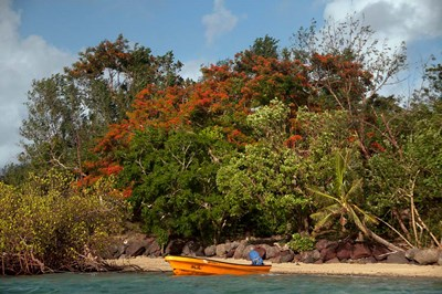 Christmas Tree and Orange Skiff, Turtle Island, Yasawa Islands, Fiji Poster by Roddy Scheer / Danita Delimont for $31.25 CAD