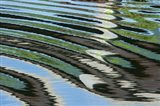 Green Trees Reflected in River with Ripples on the Water