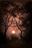 Okavango Delta, Botswana Sunset Behind Tall Trees