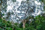 Marantaceae Forest Odzala-Kokoua National Park Congo