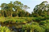 Lango Bai Odzala-Kokoua National Park Congo