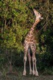 Africa, Kenya, Nairobi, Langata, Hog Ranch