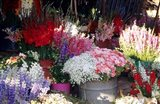 Bunch of Flowers at the Market, Madagascar