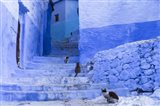 Cats in an Alley, Chefchaouen, Morocco