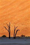 Namibia, Namib-Naukluft, Sossusvlei Desert, Dead Vlei