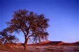 Namibia, Namib Naukluft NP, Sossusvlei desert, Tree
