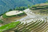 Rice Terrace with Water Buffalo, Longsheng, Guangxi Province, China
