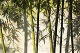 Bamboo Casting Shadows, Suzhou, Jiangsu Province, China