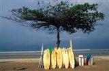 Surfboards Lean Against Lone Tree on Beach in Kuta, Bali, Indonesia