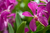 Singapore, National Orchid Garden