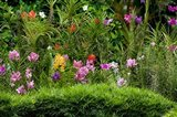 Flower Bed, National Orchid Garden, Singapore