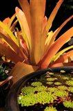 A Potted Plant, Cairns Botanic Gardens, Queensland, Australia