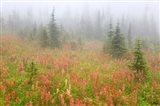 British Columbia, Revelstoke NP, Misty meadow