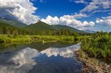 Beaver pond along the Flathead River near Fernie, British Columbia, Canada
