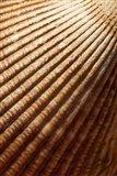 Sea shell pattern, Stanley Park, British Columbia