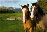 Horses in pasture, British Columbia