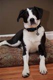 British Columbia, Mission, coon hound dog