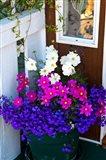 British Columbia, Victoria, Flower Pot