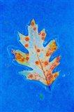 Canada, Quebec, Mount St Bruno Conservation Park Red Oak Leaf Caught In Ice