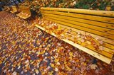 Quebec City Park Bench in Fall