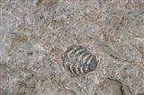 Fossilized Creatures on Akpatok Island
