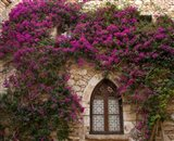 Bright Pink Bougainvillea, Eze, France
