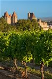 Vineyard Overlooking La Cite Carcassonne