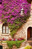 Flowering Vines, Historic Eze