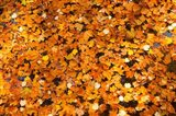 Autumn Leaves, Jardin du Luxembourg