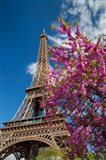 Pink Tree by the Eifel Tower