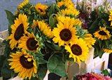 Market Sunflowers, Nice, France