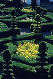 Garden at Villandry Chateau in France