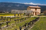 Stone House and Vineyard, Mt Ventoux
