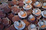 Trouville Fish Market, Calvados, France