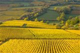 Autumn Morning in Pouilly-Fuiss' Vineyards