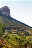 Cassis Cliff, Sea and Vineyards on the Slope