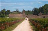 Chateau Grand Mayne and Vineyard