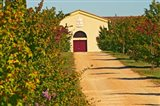 Petit Verdot Vines and Winery