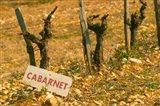 La Truffe de Ventoux, Provence, France