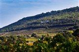 Vacqueyras Vineyards, France