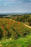 Chateau Romanin Vineyard, St Remy de Provence France