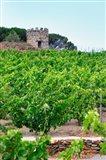 Domaine la Tour Vieille, Vineyard, France