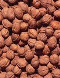 Walnuts, Normandy, France