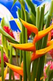 Heliconia Flower, Seafront Market